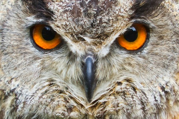 Washington-Area Runners See Uptick of Owl Attacks