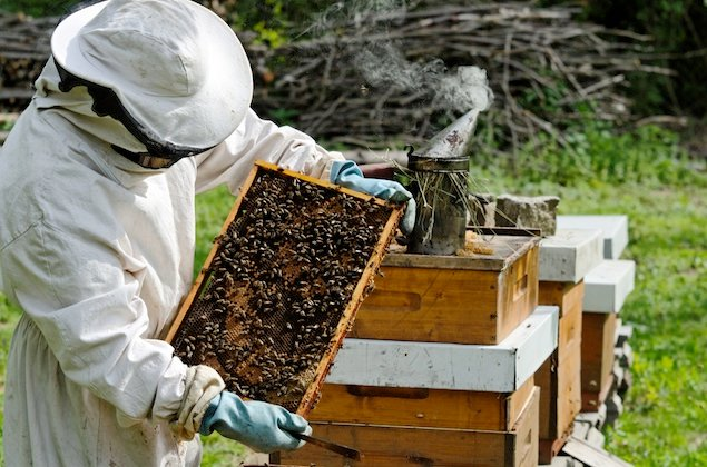 The Rise of Urban Beekeeping in Washington
