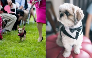Adorable Alert: Weddings With Dogs