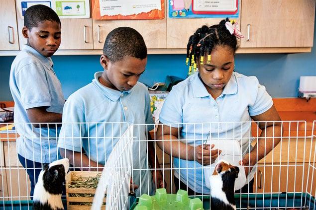 Teacher's Pets: Animals in the Classroom