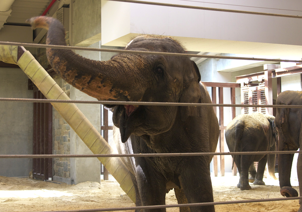Bozie the Painting Elephant Debuts at the National Zoo (Photos)
