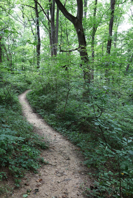 Arlington hiking trails. DC hiking. DC biking.