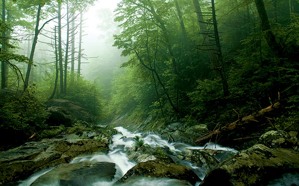 DC hiking. DC biking. Mountain streams rush over moss-covered rocks in Whiteoak Canyon. Photograph by Jerry Greer.