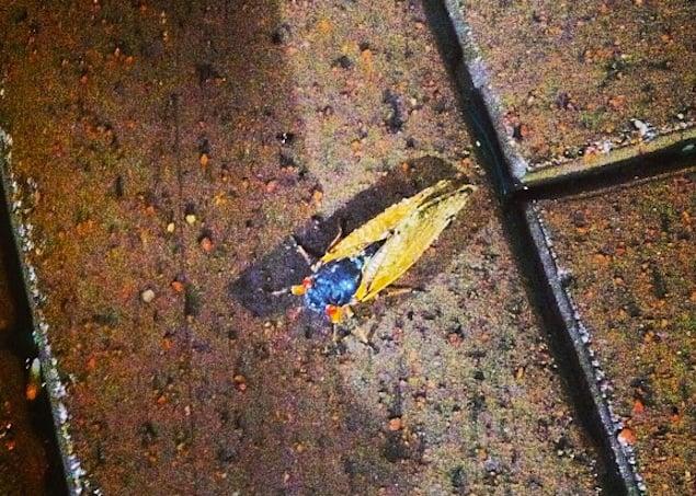 Photo Friday: Cicada Sighting