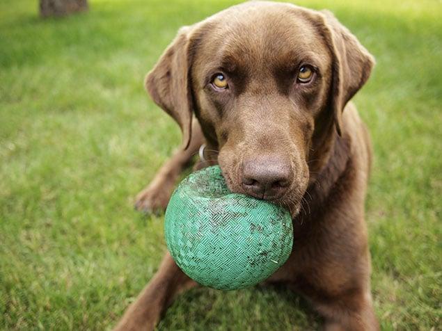 """A Search Has Begun for Washington's """"Top Dog"""""""