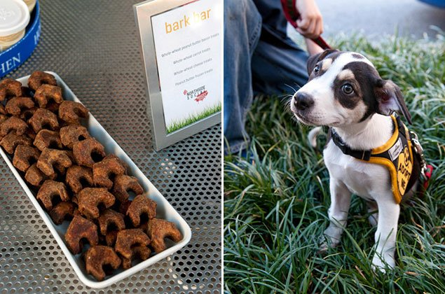 Photos From Washingtonian's Yappy Hour