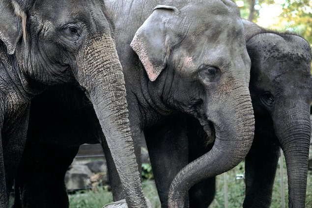 National Zoo to Get 3 More Elephants in 2014 (Photos)