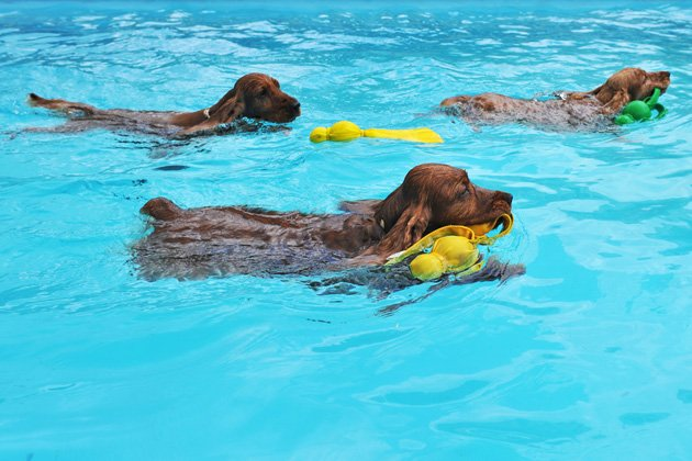 Take Your Pup to the Pool September 7