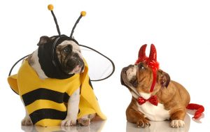 In It to Win It: How to Win Washington Pet Costume Contests