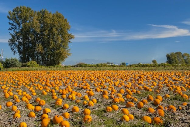 The Mid-Fall Guide to Pumpkin and Apple Picking in Washington
