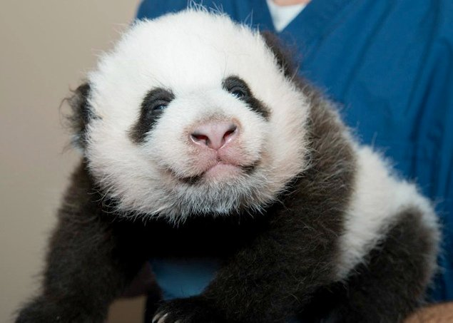 Here's Your Chance to Vote for the Name of the National Zoo's Panda Cub