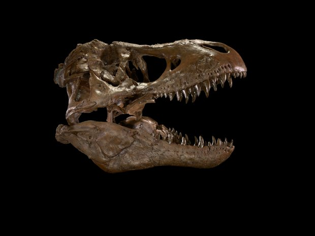 Smithsonian to Close Dinosaur Exhibit for 5 Years