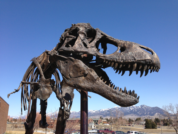 Tyrannosaurus Rex Arrives at Smithsonian