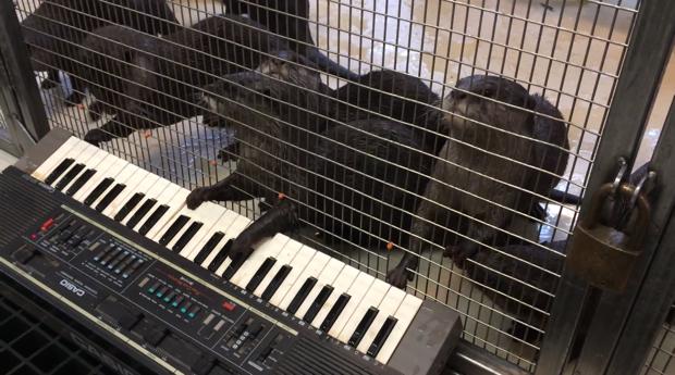 Animals Making Music at National Zoo