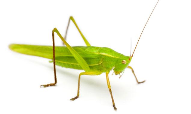 """Eat Bugs at a Pop-Up """"Pestaurant"""" Next Week"""