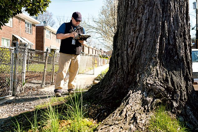 Tree Whisperers: Meet the DC Employees Who Watch Over Our Trees