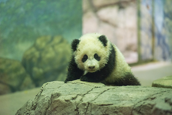 Bao Bao Strikes a Pose