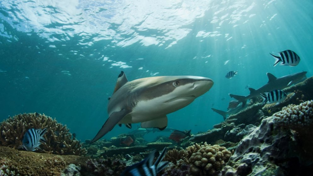 What to Eat During Shark Week: Not Shark