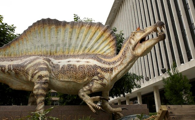 Spinosaurus Roars Into the National Geographic Museum