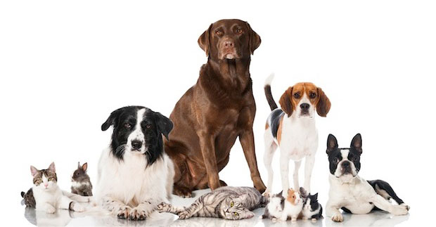 Survey: Pick Washington's Best Pet Groomers, Vets, Sitters, and More