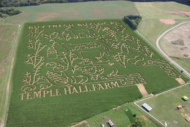 Weekend Wonders: Temple Hall Farm's Corn Maize & Fall Festival