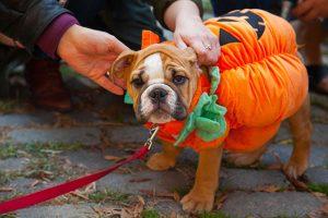 Photo Contest Winners: Halloween in Washington