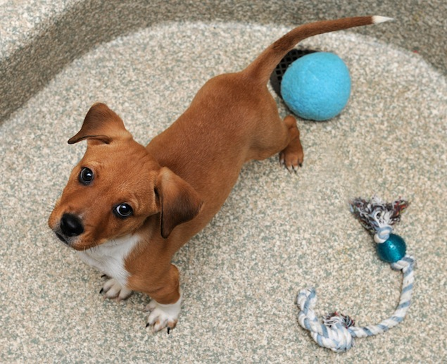 Washington's Adoptable Pets of the Week, October 10, 2014