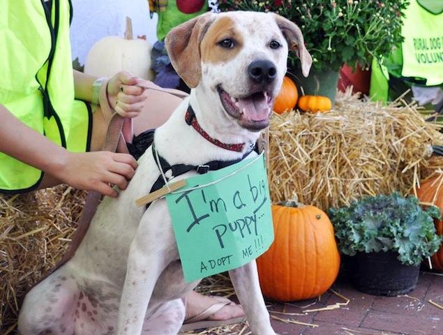 Washington's Adoptable Pets of the Week: October 31, 2014