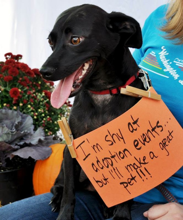 Washington's Adoptable Pets of the Week: October 24, 2014