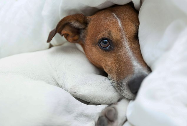 Ask a Vet: Is Our Dog Afraid of the Dark?