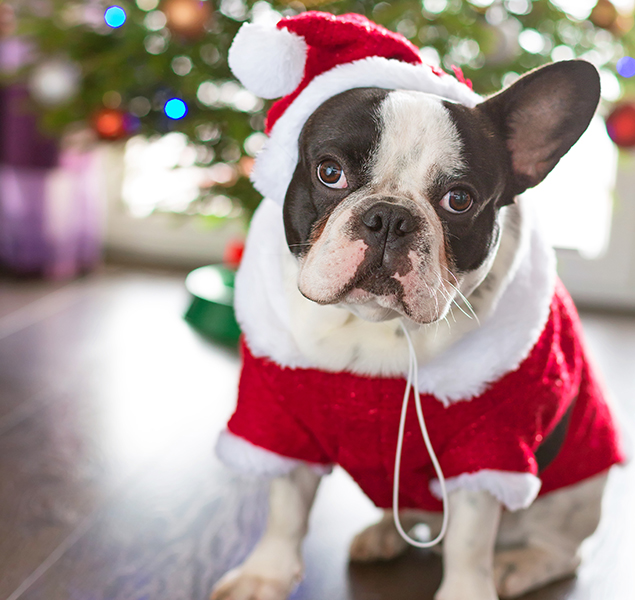 Pet-Friendly Events in Washington, November 15 to 23