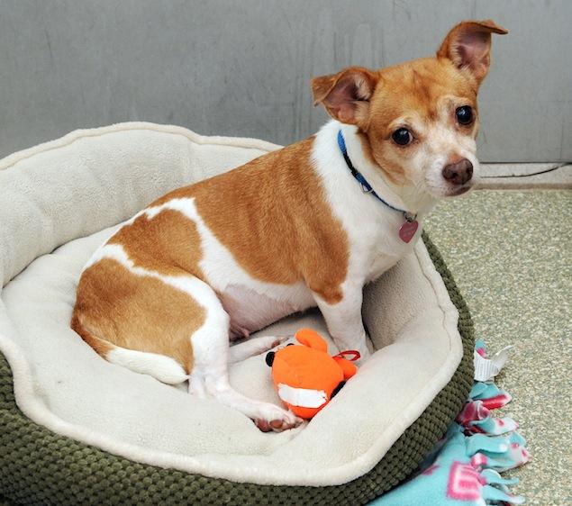 Washington's Adoptable Pets of the Week: November 21, 2014