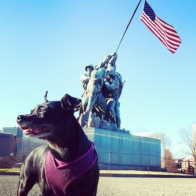Reader Photos: Washington's Cutest Pets, November 11, 2014