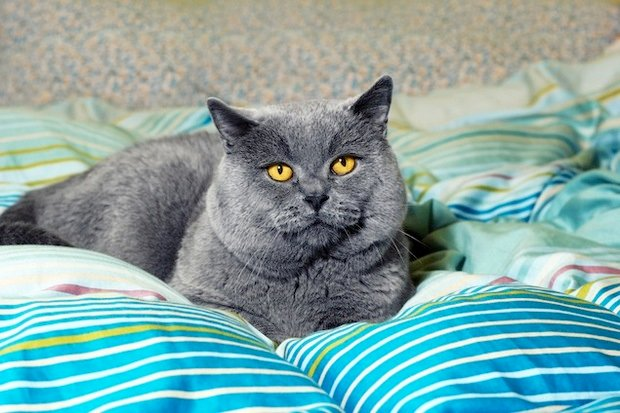 Ask A Vet Why Does The Cat Poop On The Bed Washingtonian Dc