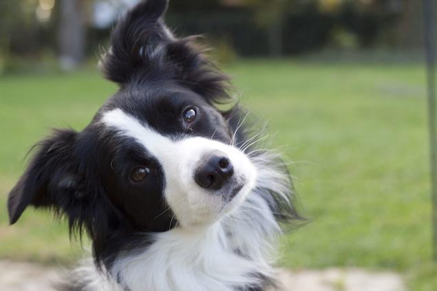 Reader Photos: Washington's Cutest Pets, November 4, 2014