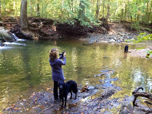 Destination Dog: Scott's Run Nature Preserve