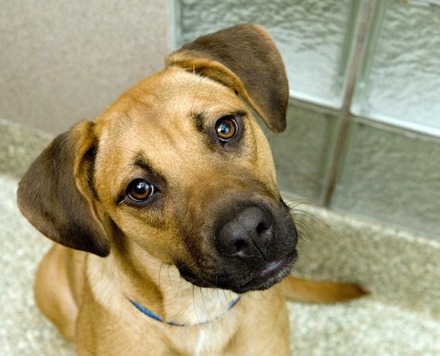 Washington's Adoptable Pets of the Week: December 19, 2014