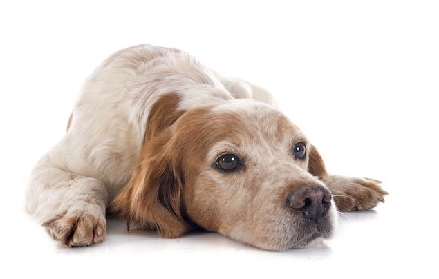 Ask a Vet: Are the Small Lumps On My Dog's Skin Serious?