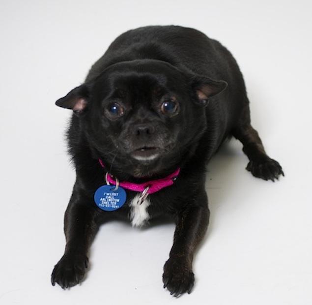 Washington's Adoptable Pets of the Week: January 23, 2015