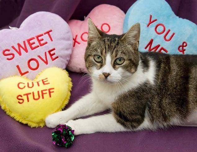Washington's Adoptable Pets of the Week: January 30, 2015
