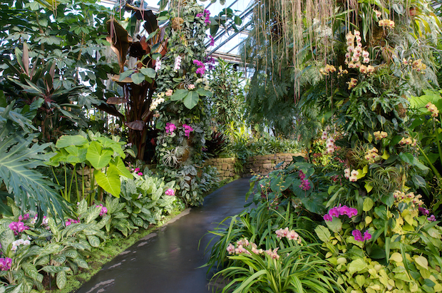 See 5,000 Orchids in Bloom This Weekend