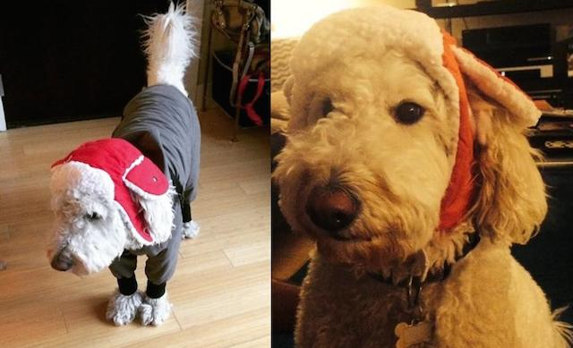 """How Did You Dress Your Dog for the """"Big"""" Snow?"""
