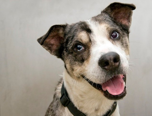 Adoptable Pets of the Week: January 2, 2015