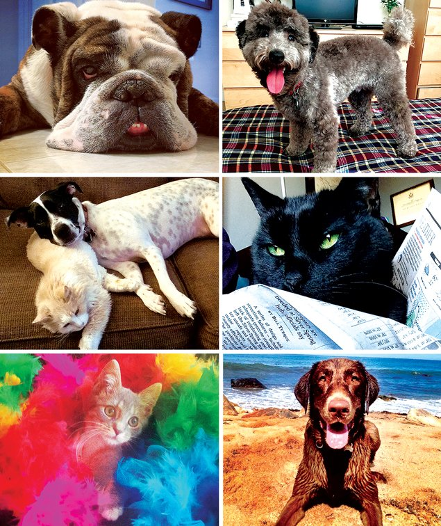 Pet Superlatives