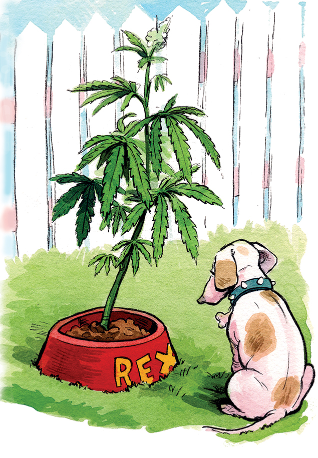 Using Pot to Treat Your Pets
