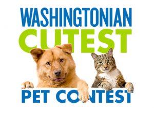 Washingtonian's Cutest Pet Contest 2015 Winner