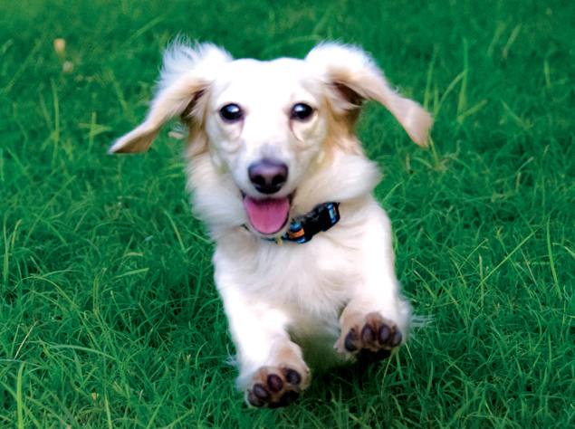Washingtonian's Cutest Pets From A to Z (Photos)