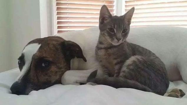 Reader Photos: Washington's Cutest Pets, March 3, 2015