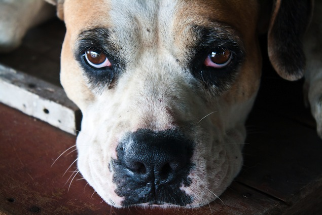 Is Something Wrong with my Dog's Eyes?
