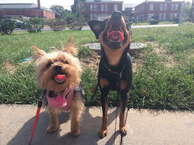 Reader Photos: Washington's Cutest Pets, March 10, 2015